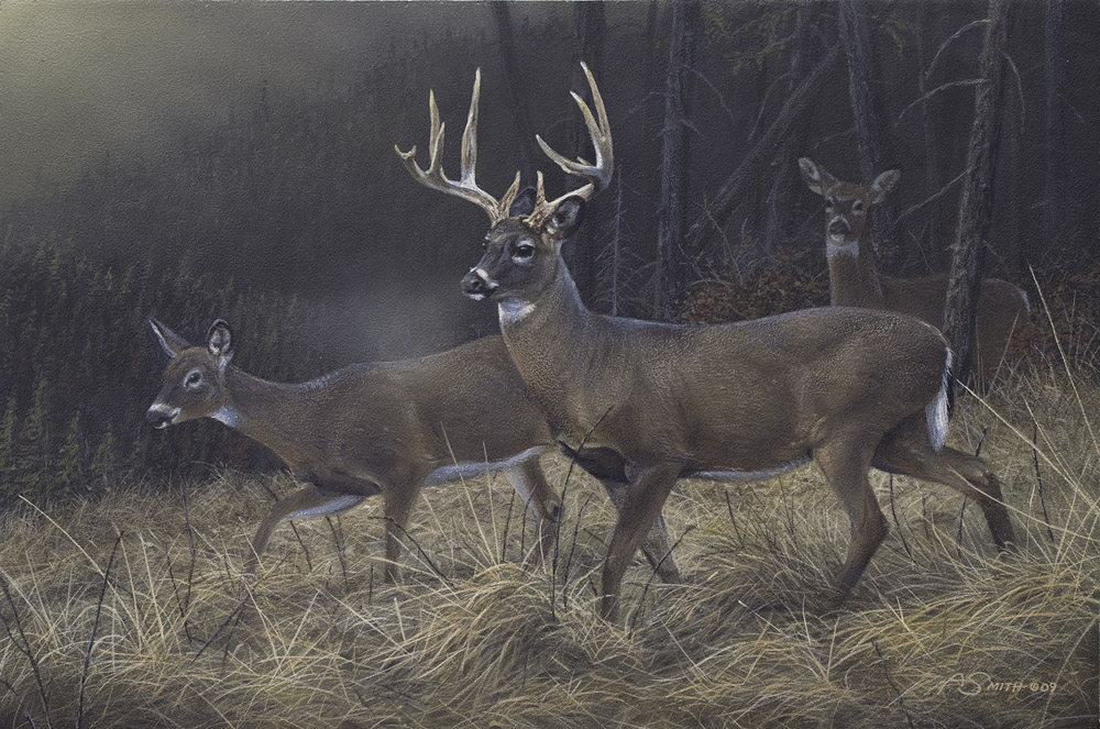 1North American – Whitetail Deer by Adam Smith