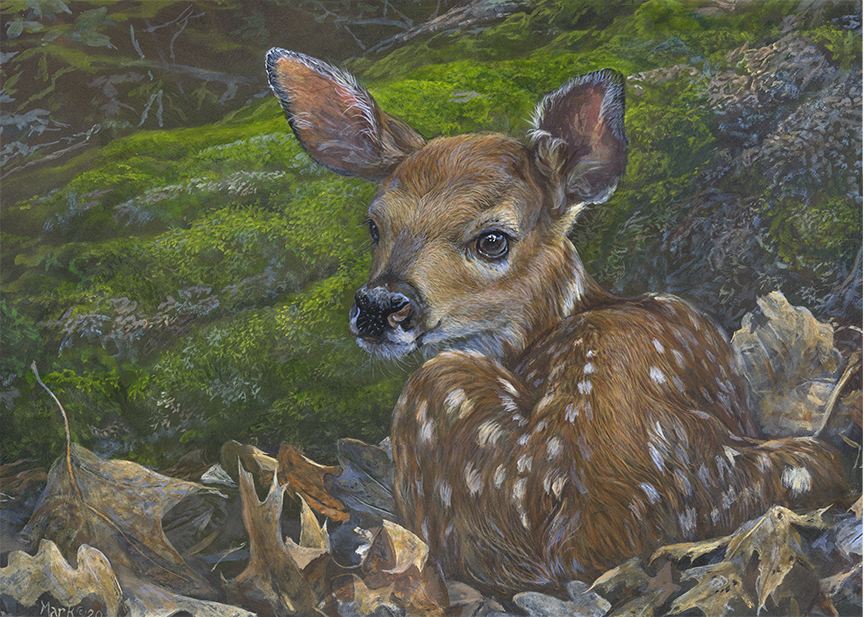 Fawn by Laura Mark-Finberg