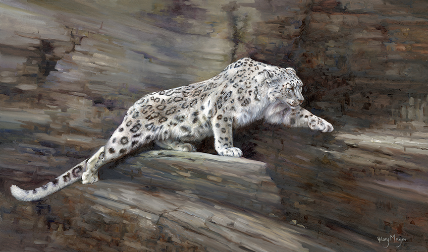 Wildlife – Snow Leopard on Rockface by Hilary Mayes
