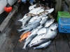 Company Fishing Charter