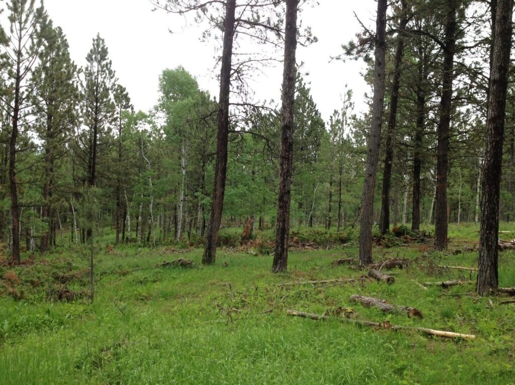 Forest thinning project