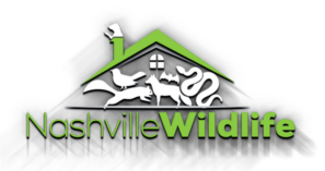 Wildlife Removal and Animal Damage Control of Nashville, Bellvue, Brentwood, La Vergne