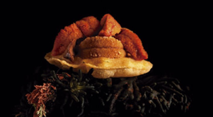Yellow corn cake with hedgehog - Gastroactitud.  Passion for food
