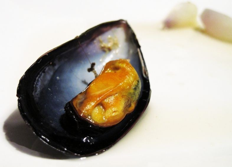 Mussels from Galicia