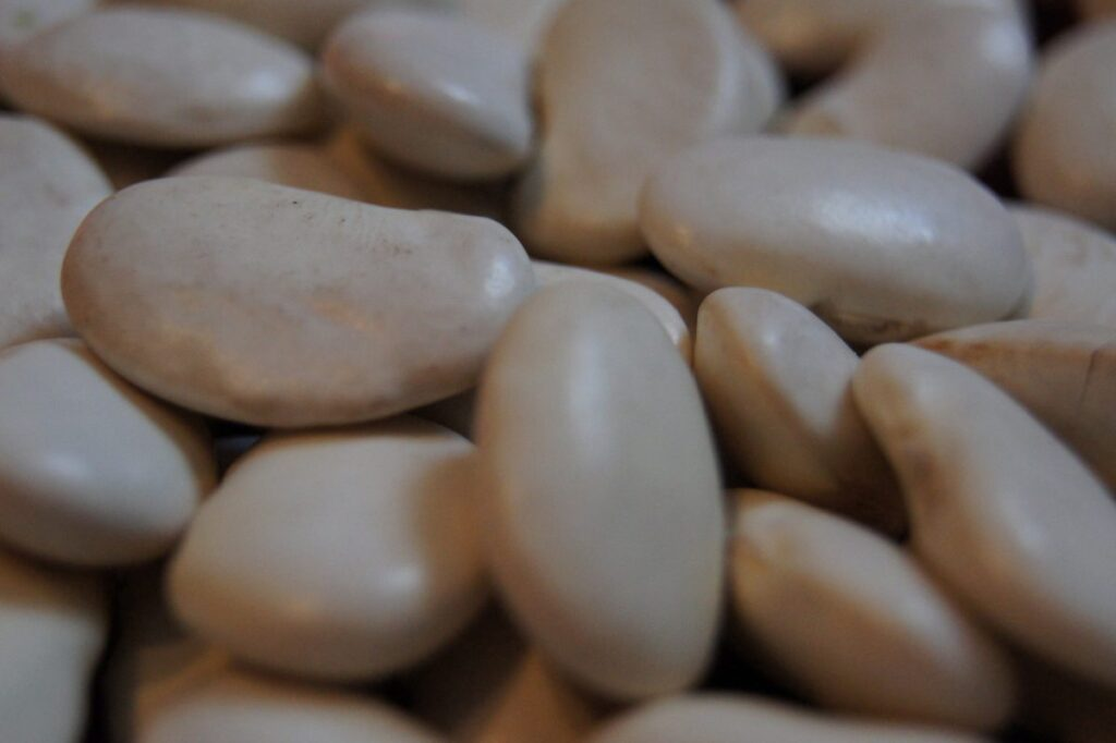 Agricultural beans
