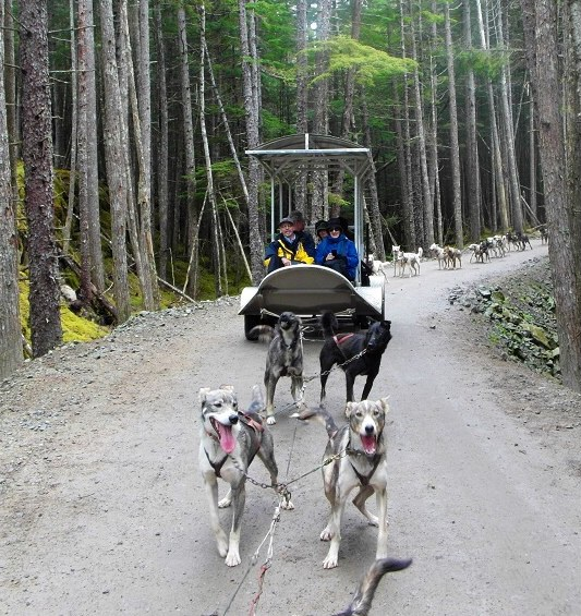 Summertime sled ride with our team of 16 dogs! - Skagway Alaska