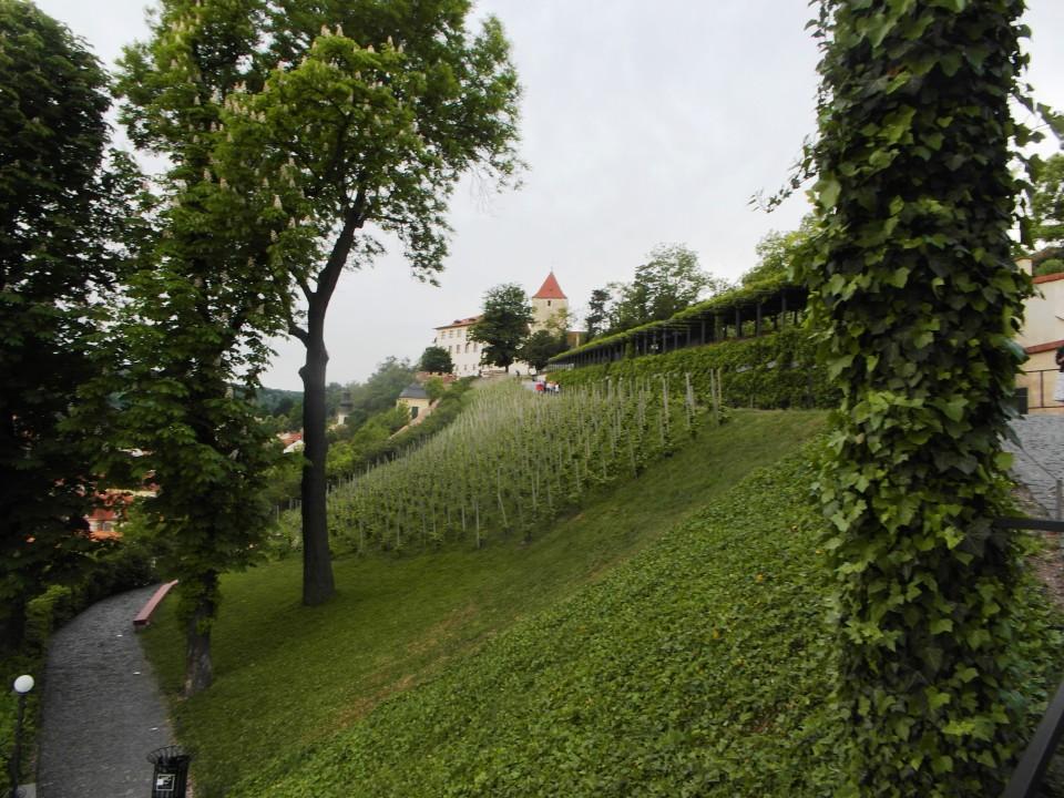 St. Wenceslas Vineyard at Villa Richter in Prague