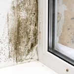 mold removal milford, mold cleanup milford, mold damage milford