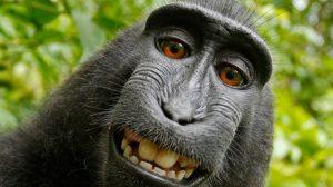 Monkey Ape Chimpanzee Smile