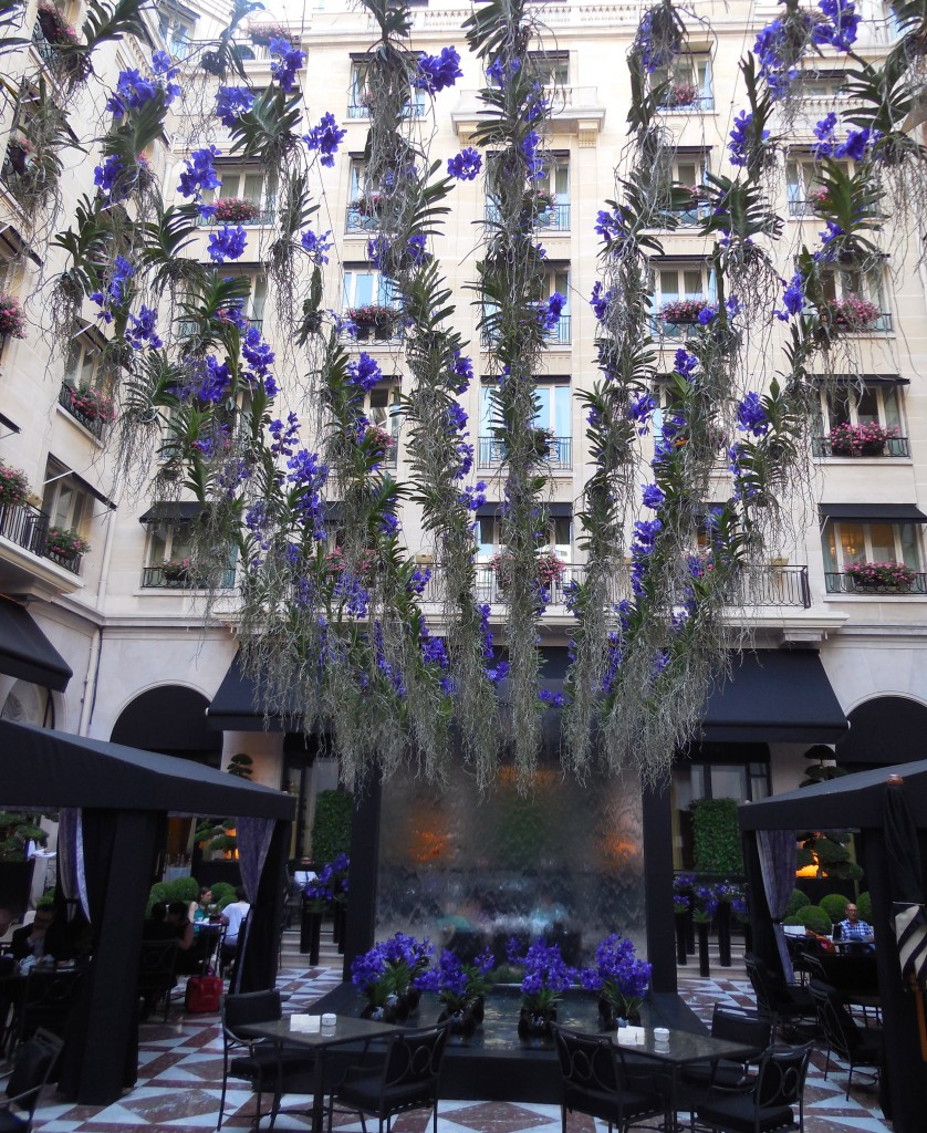 hanging orchids four seasons