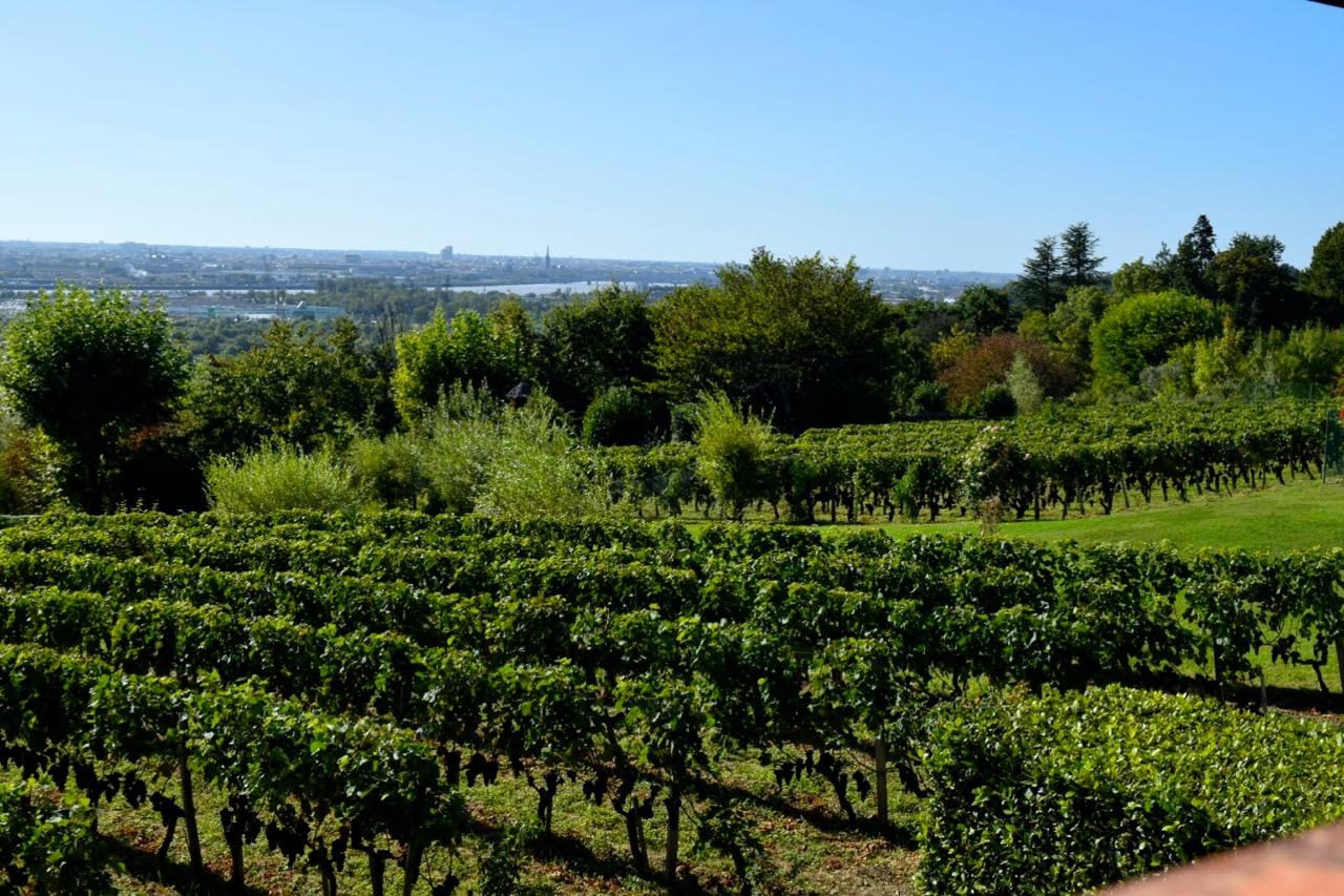 vinyards st james bordeaux