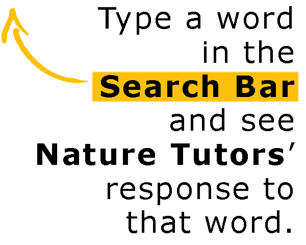 Nature Tutor Search by Umair Zia