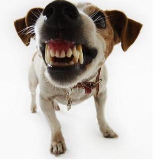 dog bite case, lawsuit