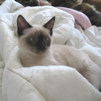 FAIR helps kittens