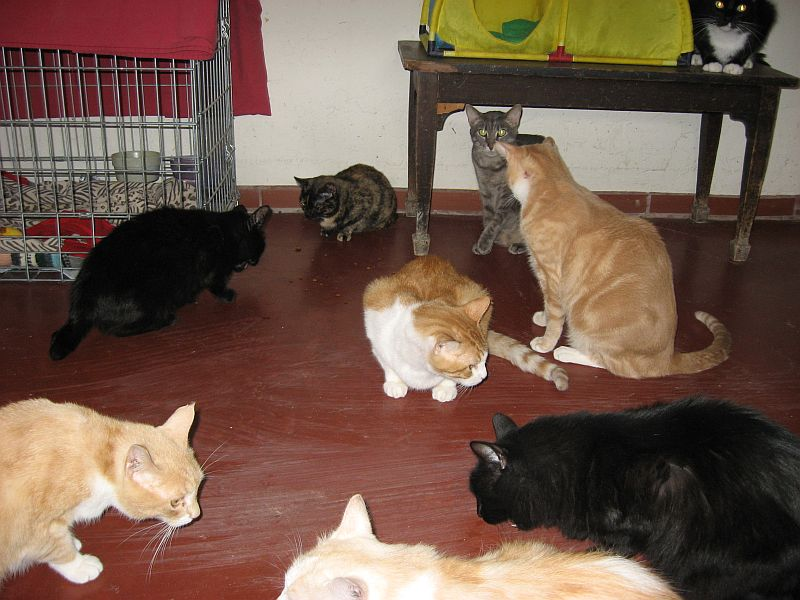 Visit the Cat House - Oct 27