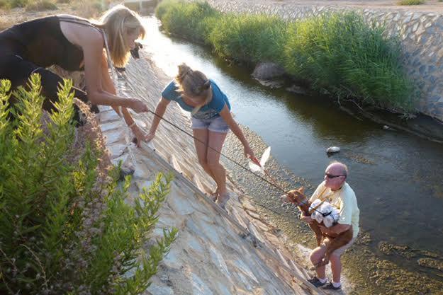 Galgos del Sol river rescue