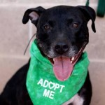 In the Arms of Angels, Tucson pet rescue
