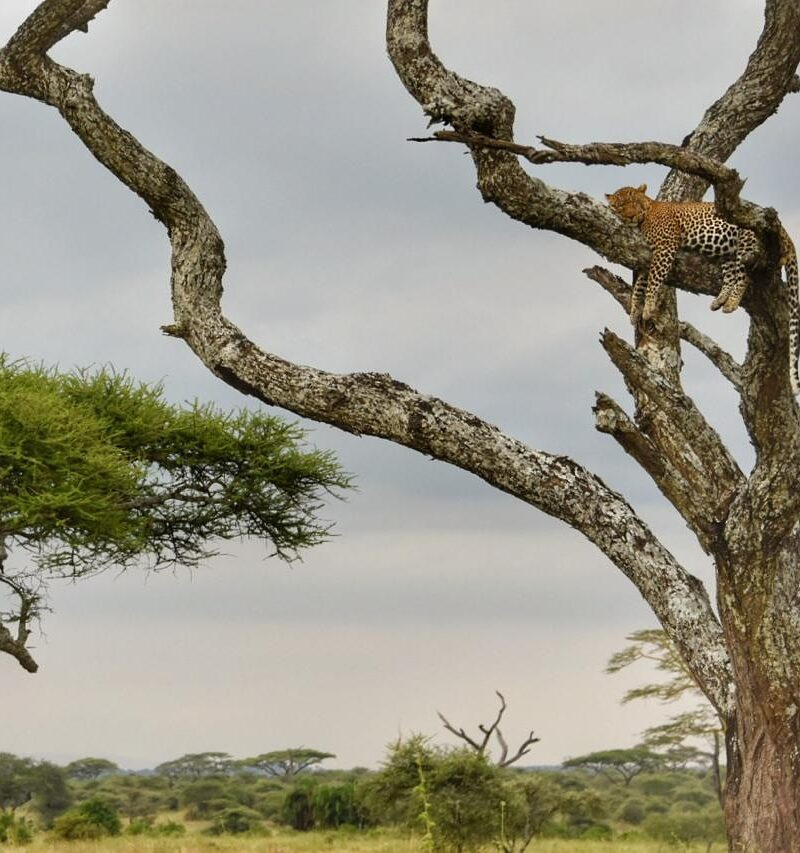 7 Days Tarangire Lake Manyara Serengeti and Ngorongoro