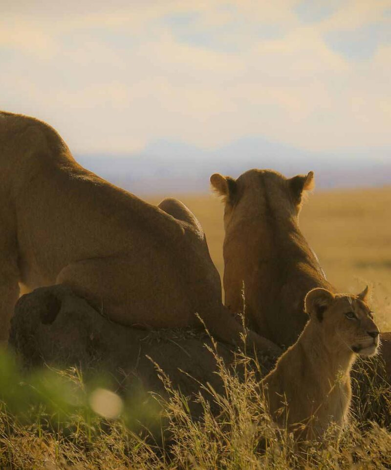 3 Days Safari to Tarangire Lake Manyara and Ngorongoro Crater