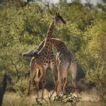 Combo Tour 12 Days - Climbing and Safari Itinerary