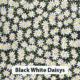Black White Daisys