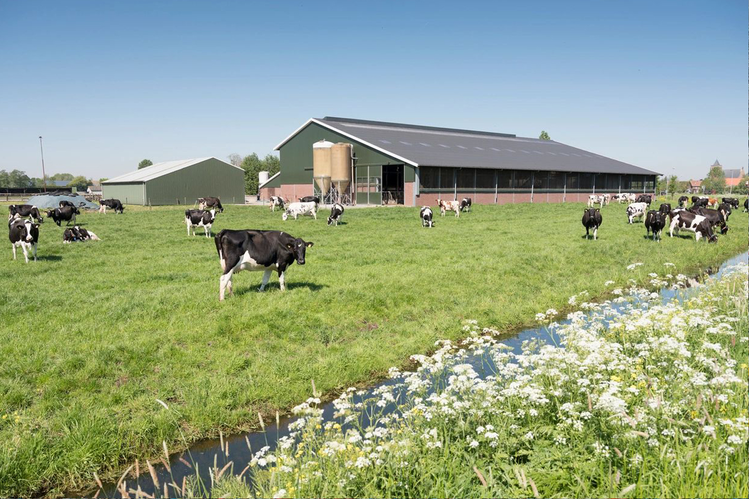 dairy farm2