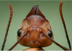 ants head closeup