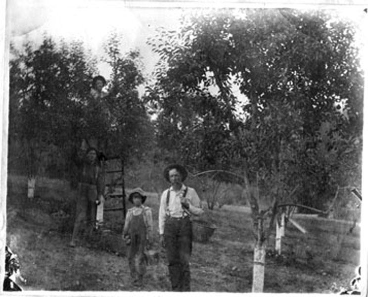 Harris Family Farm