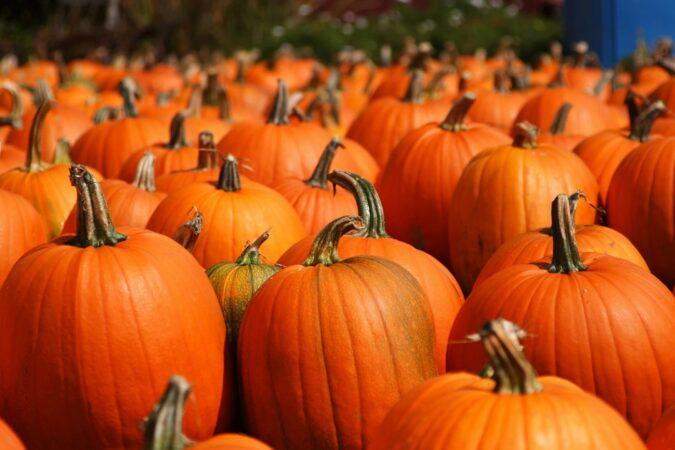 Bellevue PCC Offering Free Jack-O'-Lantern Pumpkins through October 25th