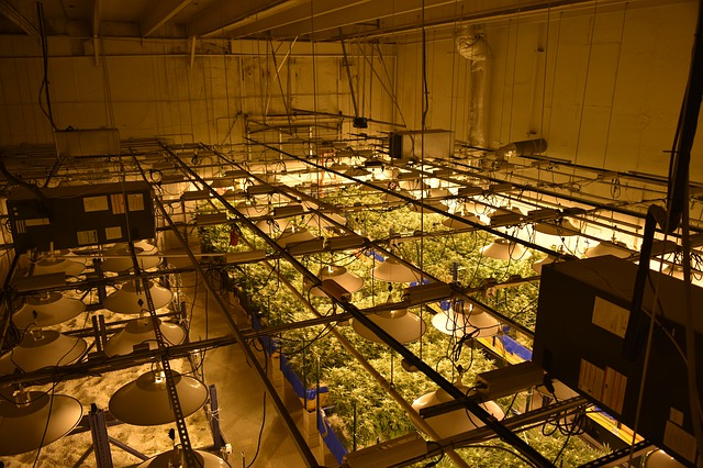 What type of lights can grow cannabis with the least carbon footprint?