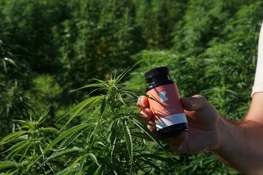 Medical Cannabis for Older Patients