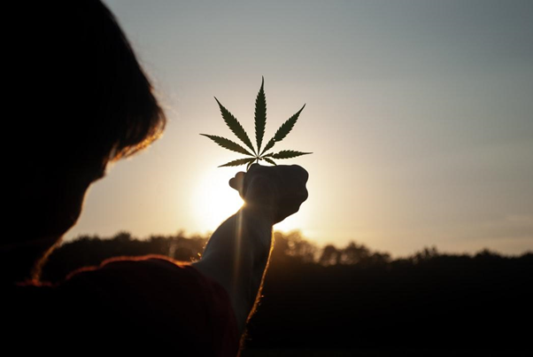 A Guide To Cannabis Marketing