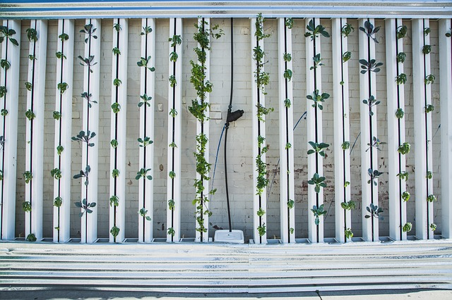 The ABC's of Vertical Farming for Beginners