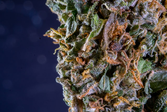 Learn Why Delta 8 THC is the Latest Cannabis Compound Buzz