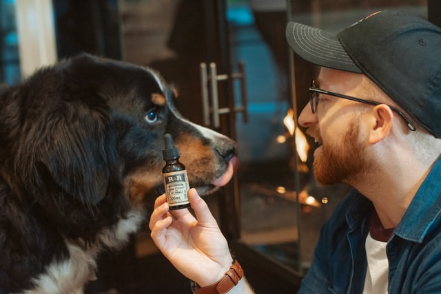 CBD for Pets — Is It Safe and How It Works?