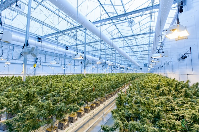 A Complete Guide To Growing Weed Indoors