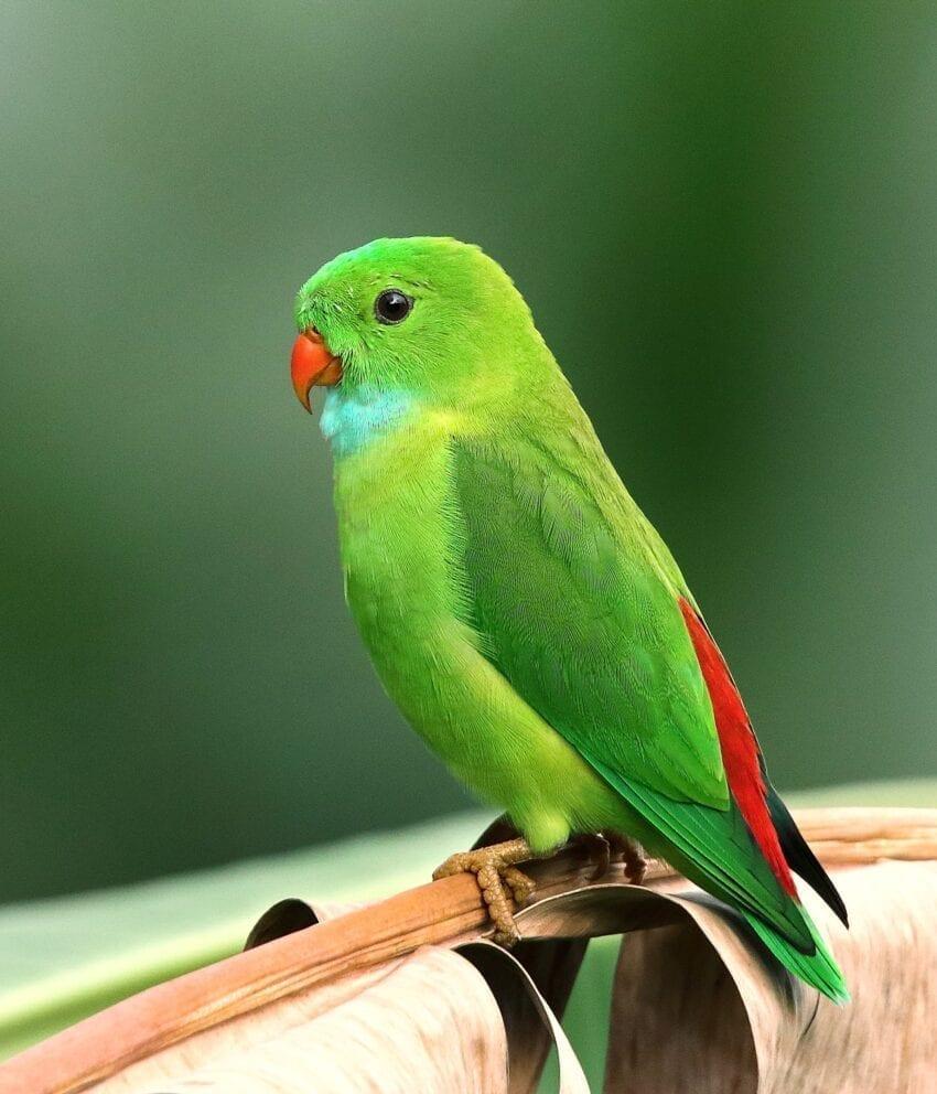 St Paul MN Como Zoo Birds