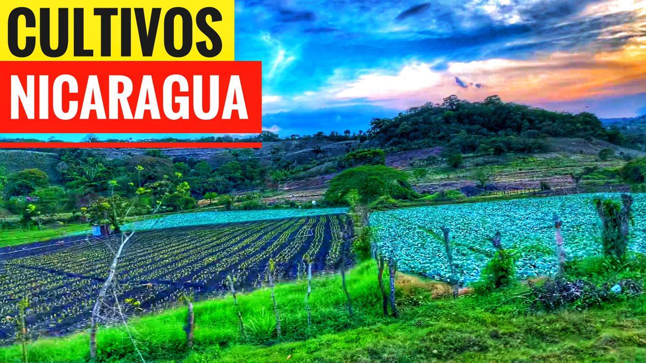 Mapa de producción agrícola de Nicaragua