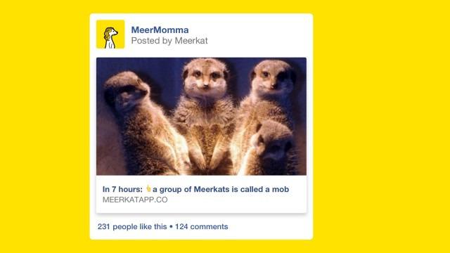 meerkat-fb-post-640x360