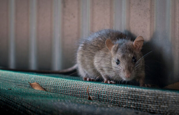 what is the hantavirus and should you be concerned
