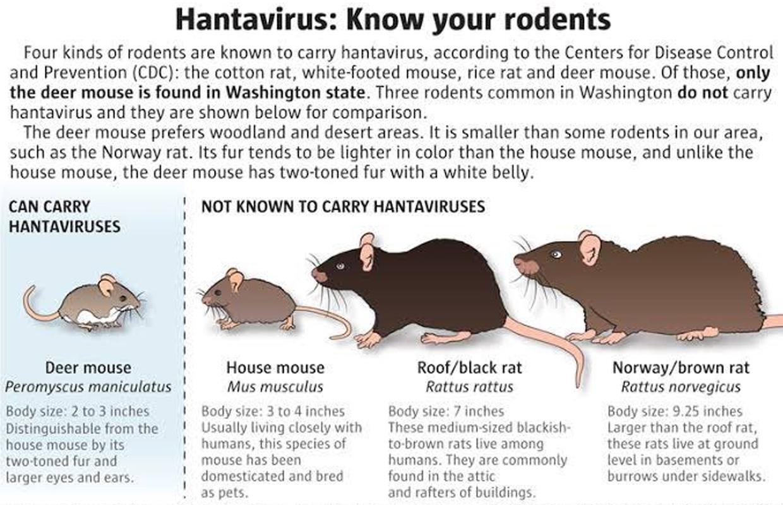 what is the hantavirus