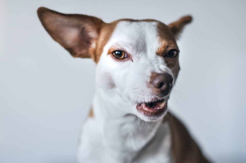Dog with funny face
