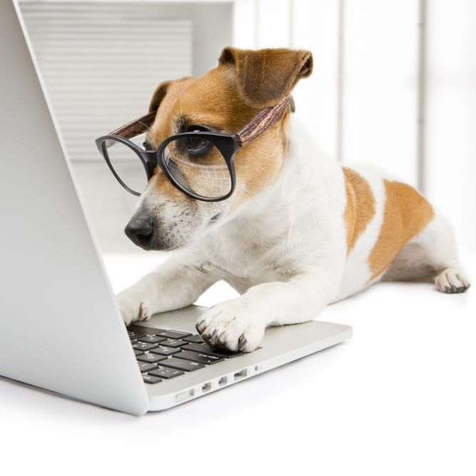 dog with glasses on a laptop