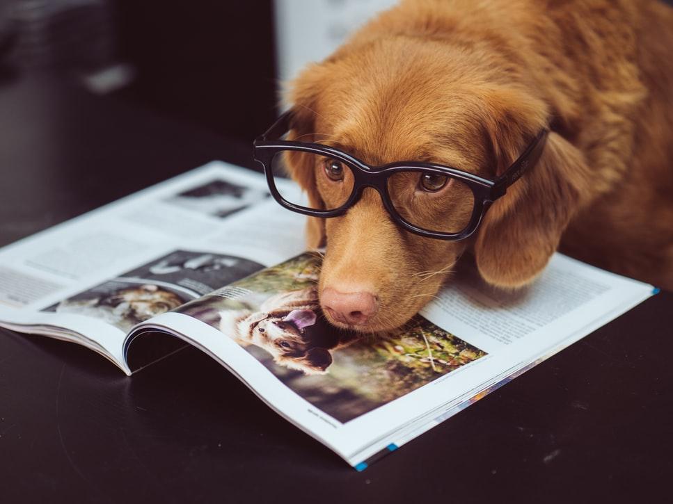 dog on magazine