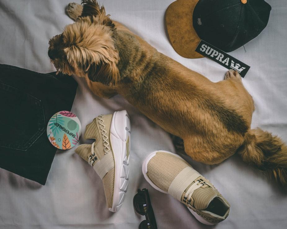 dog shoe glasses