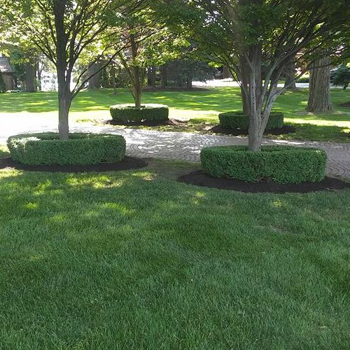 expert shrub and tree maintenance Bloomfield Hills, MI