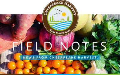 October Field Notes