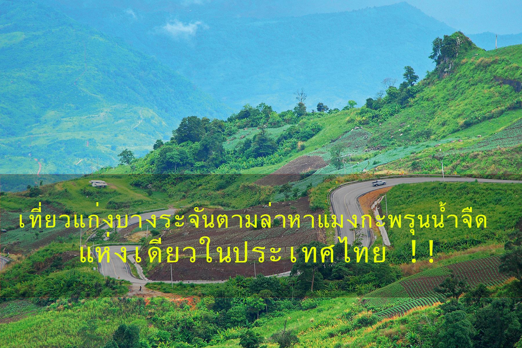 เที่ยวแก่งบางระจัน ตามล่าหาแมงกะพรุนน้ำจืด แห่งเดียวในประเทศไทย !!