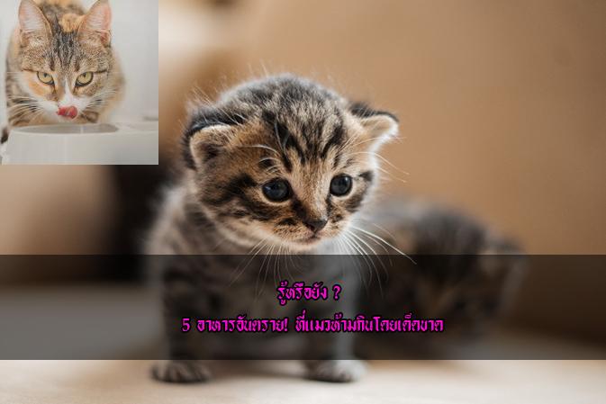 รู้หรือยัง ? 5 อาหารอันตราย! ที่แมวห้ามกินโดยเด็ดขาดข่าวน่ารู้ อัพเดทสถานการณ์ เรื่องเล่า สาระความรู้ คู่ความบันเทิง