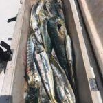 070318 Mahi Fishing Report 2 Ocean City Maryland